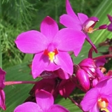 THD-purple-orchid-flowers-560x300